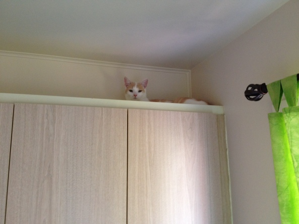 emile on teh cupboard
